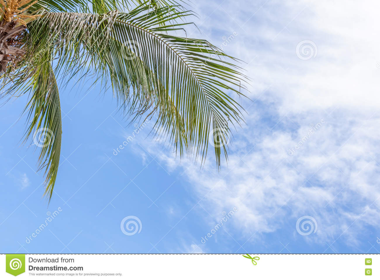 relaxing view point from under the coconut tree with blue sky ba