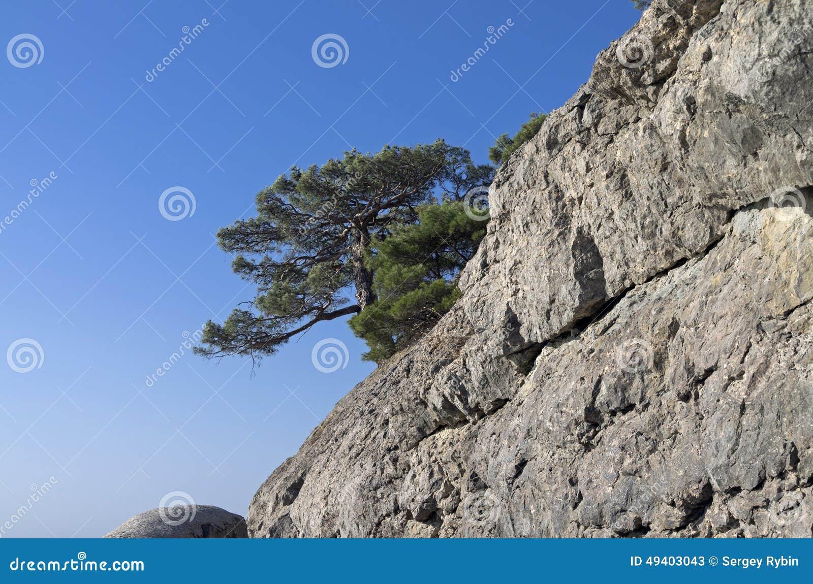Download Relictkiefer Auf Einem Felsen Krim Stockbild - Bild von felsen, sonnig: 49403043
