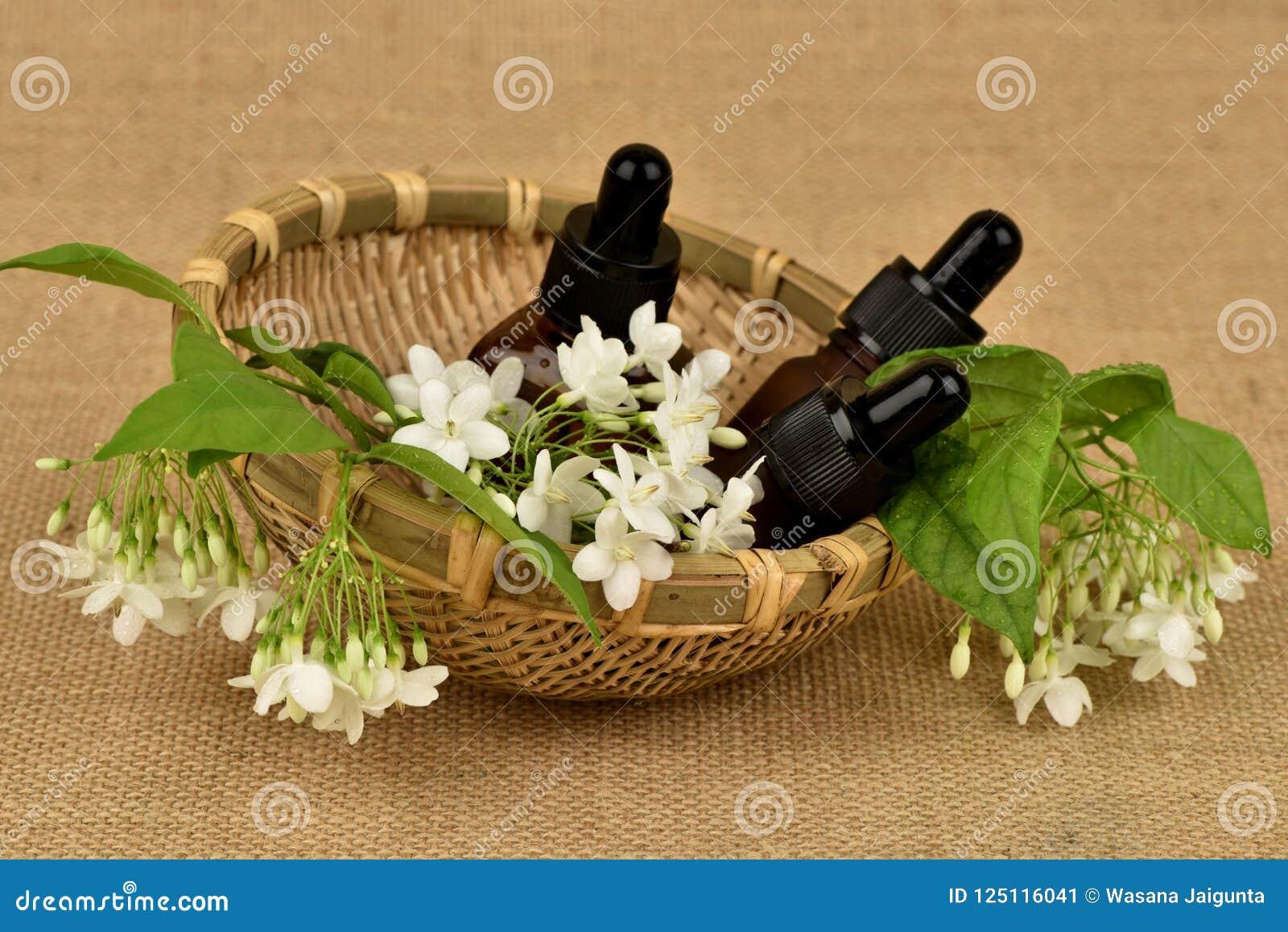 Religiosa Benth di Wrightia , i fiori per usare l estratto e l olio essenziale hanno proprietà medicinali