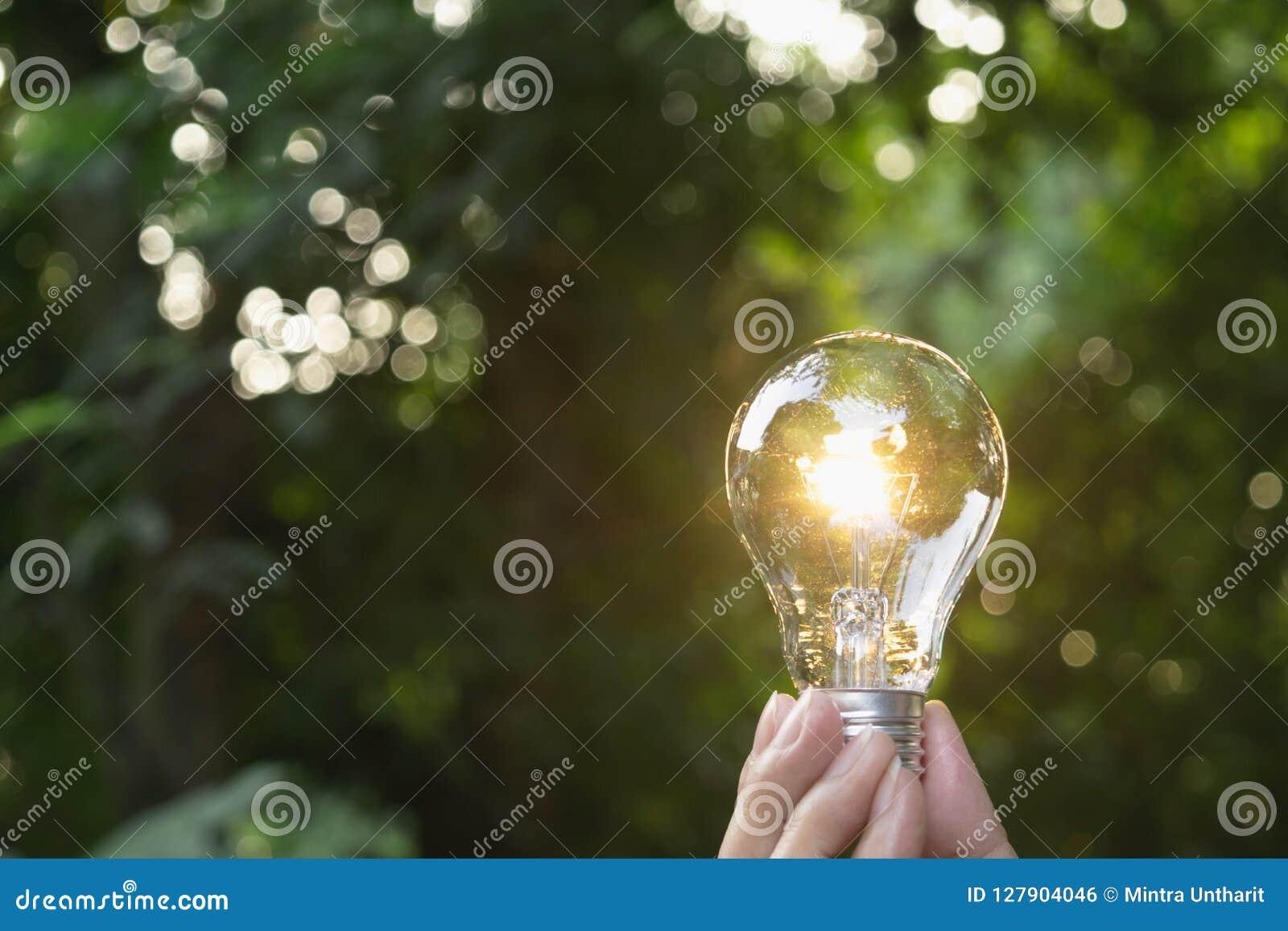 Remettez tenir l ampoule à l arrière-plan de nature de vert de jardin