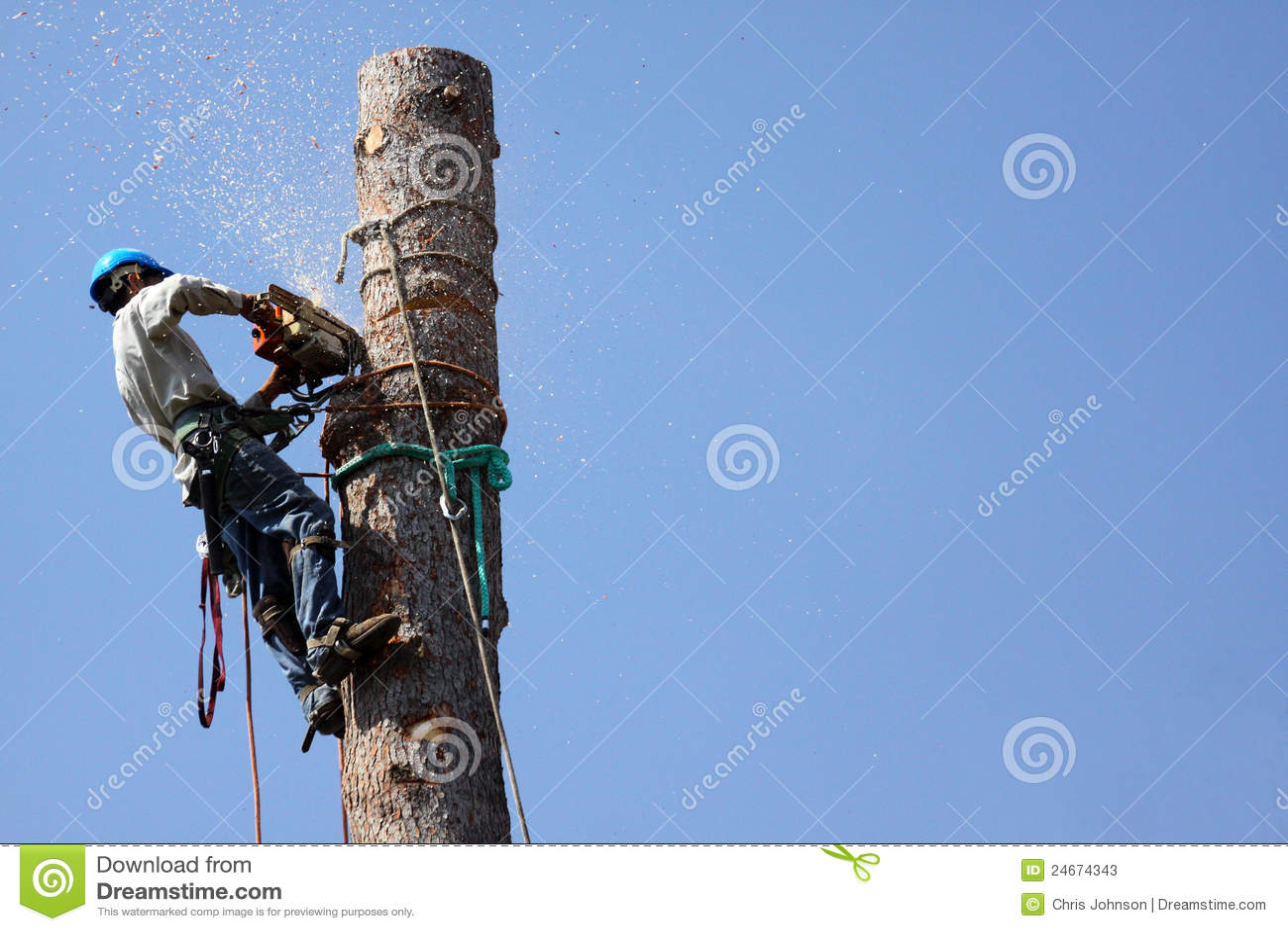 Remoção da árvore