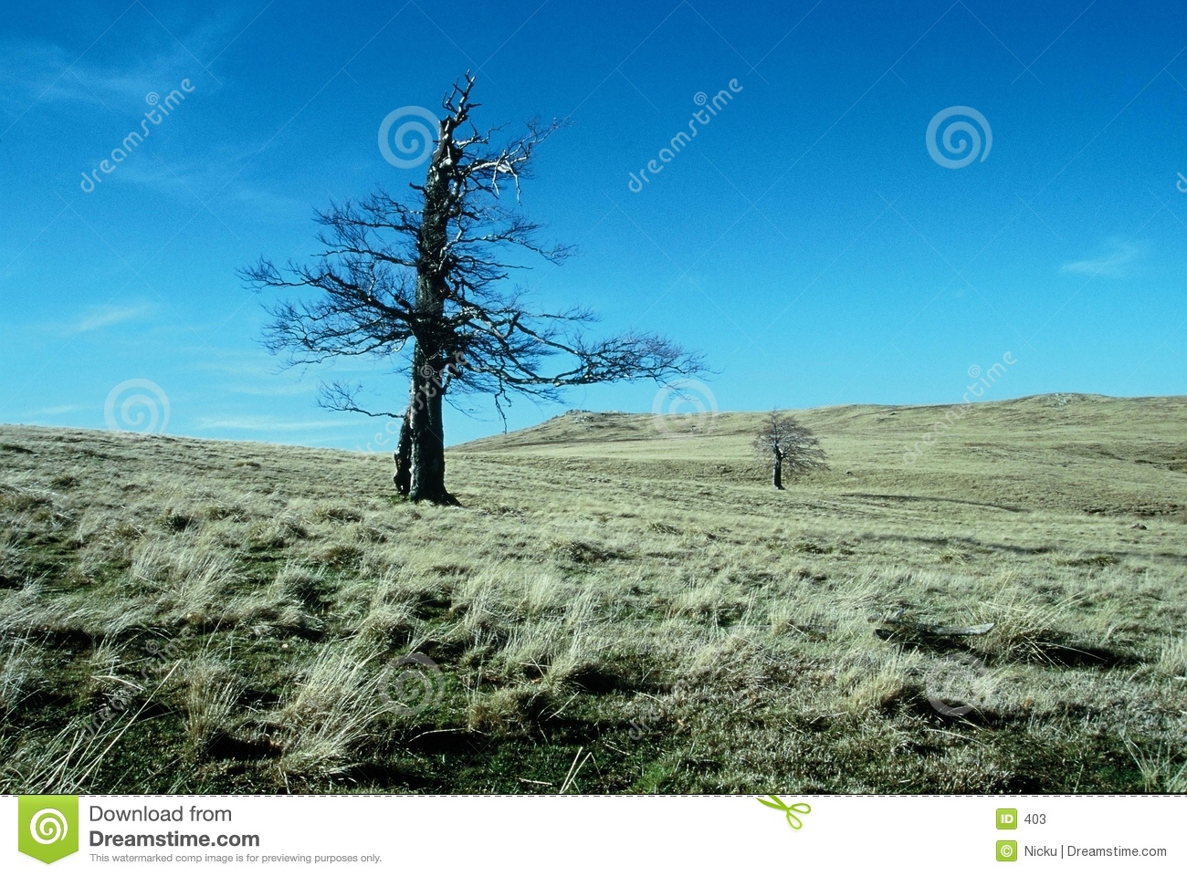 Remote tree on mountain field