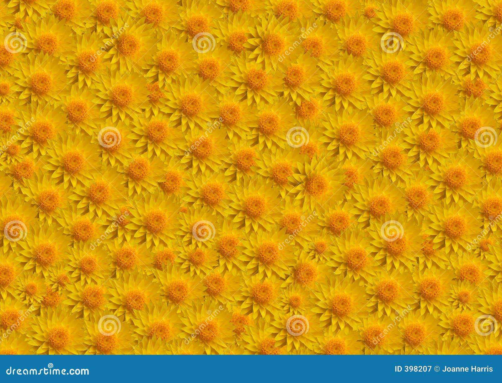Remplissage de jaune de fleurs grand