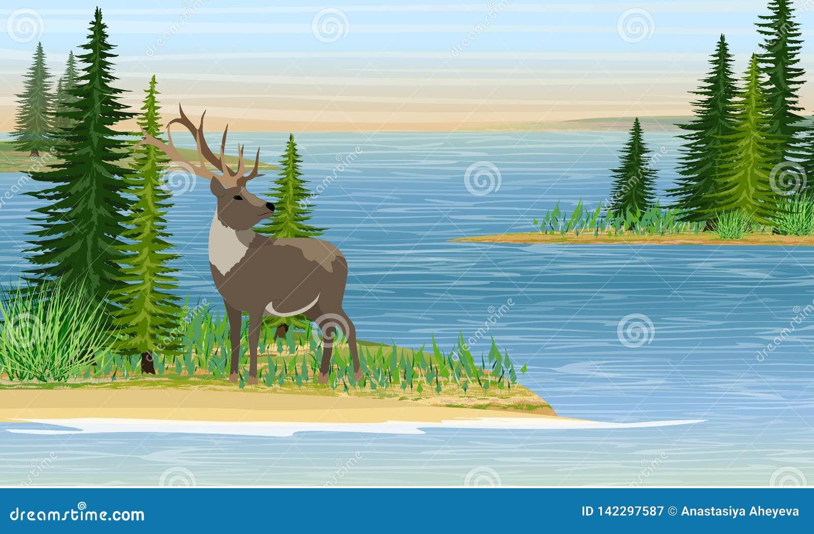 Rena com chifres ramificados no mar ou em um grande lago Sandy Beach com grama e abeto