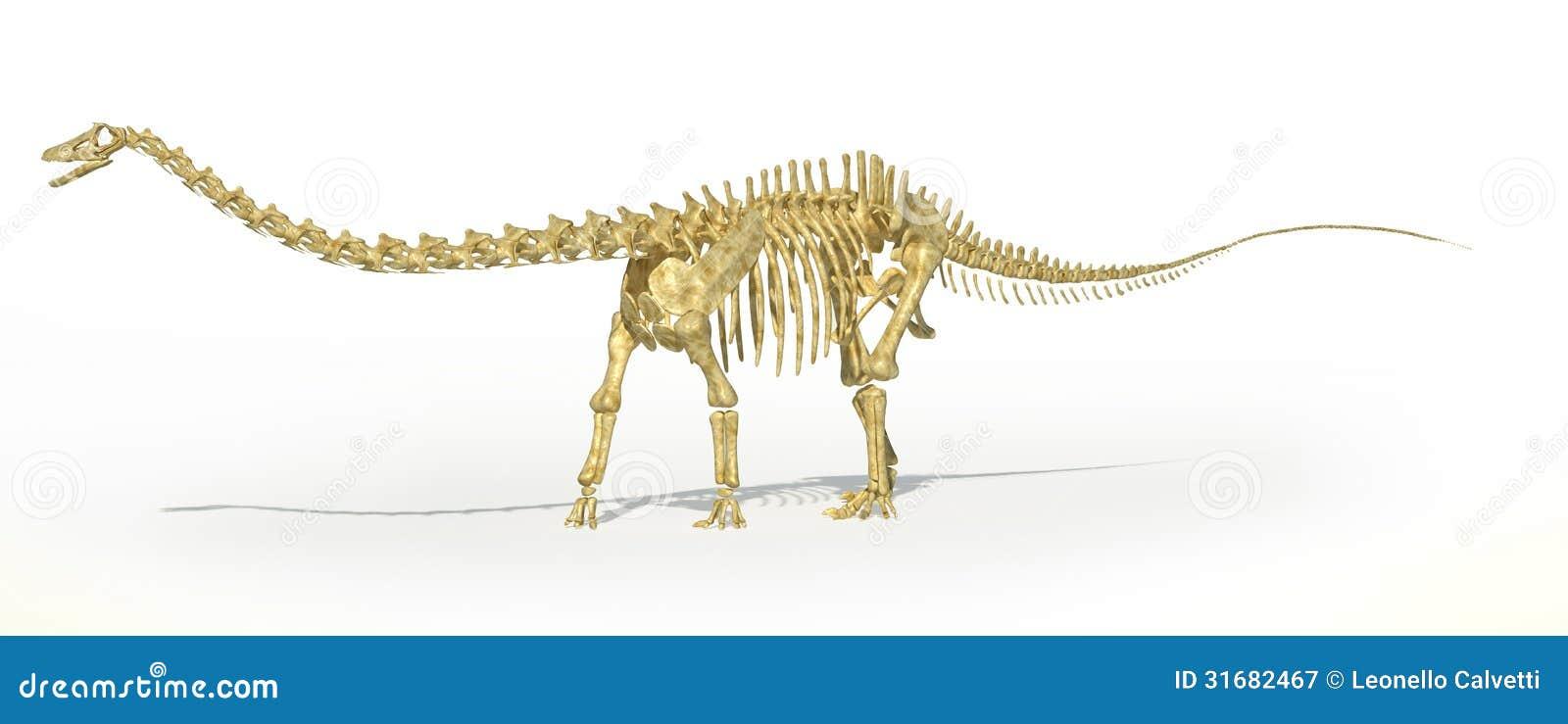 Rendu squelettique de photo realistc de dinosaure de - Dinosaure diplodocus ...
