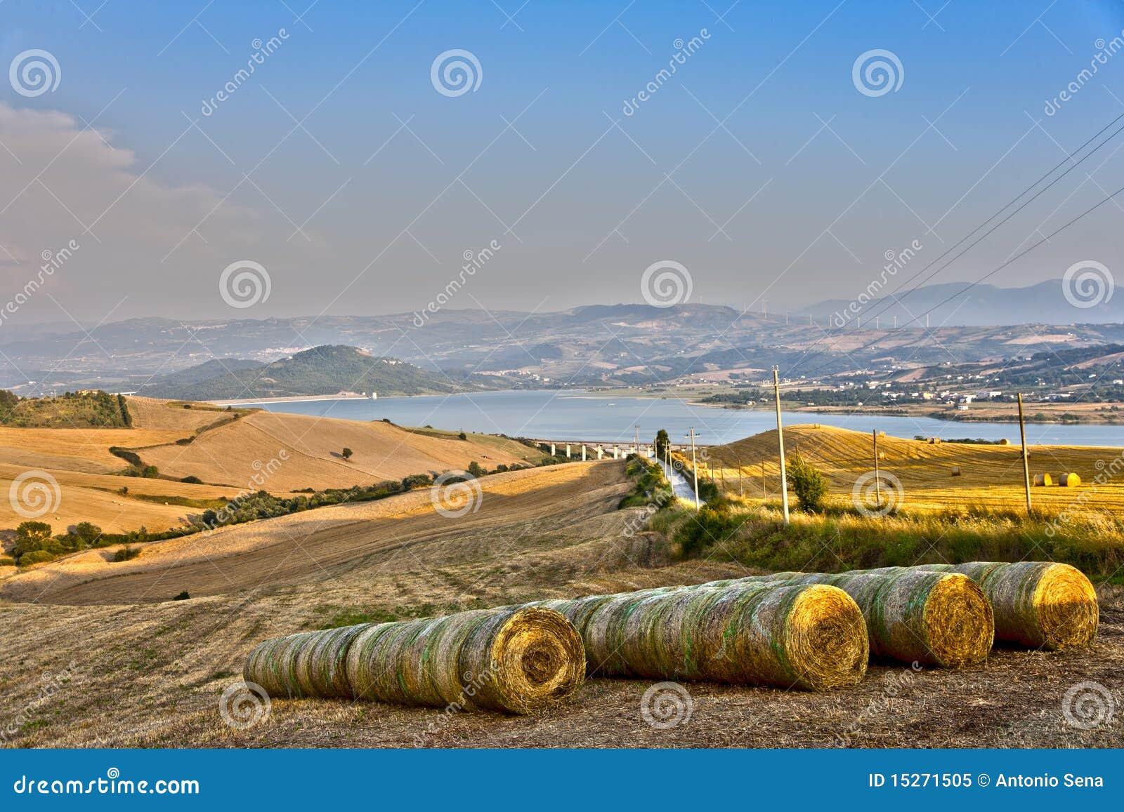 bamboo farm business plan
