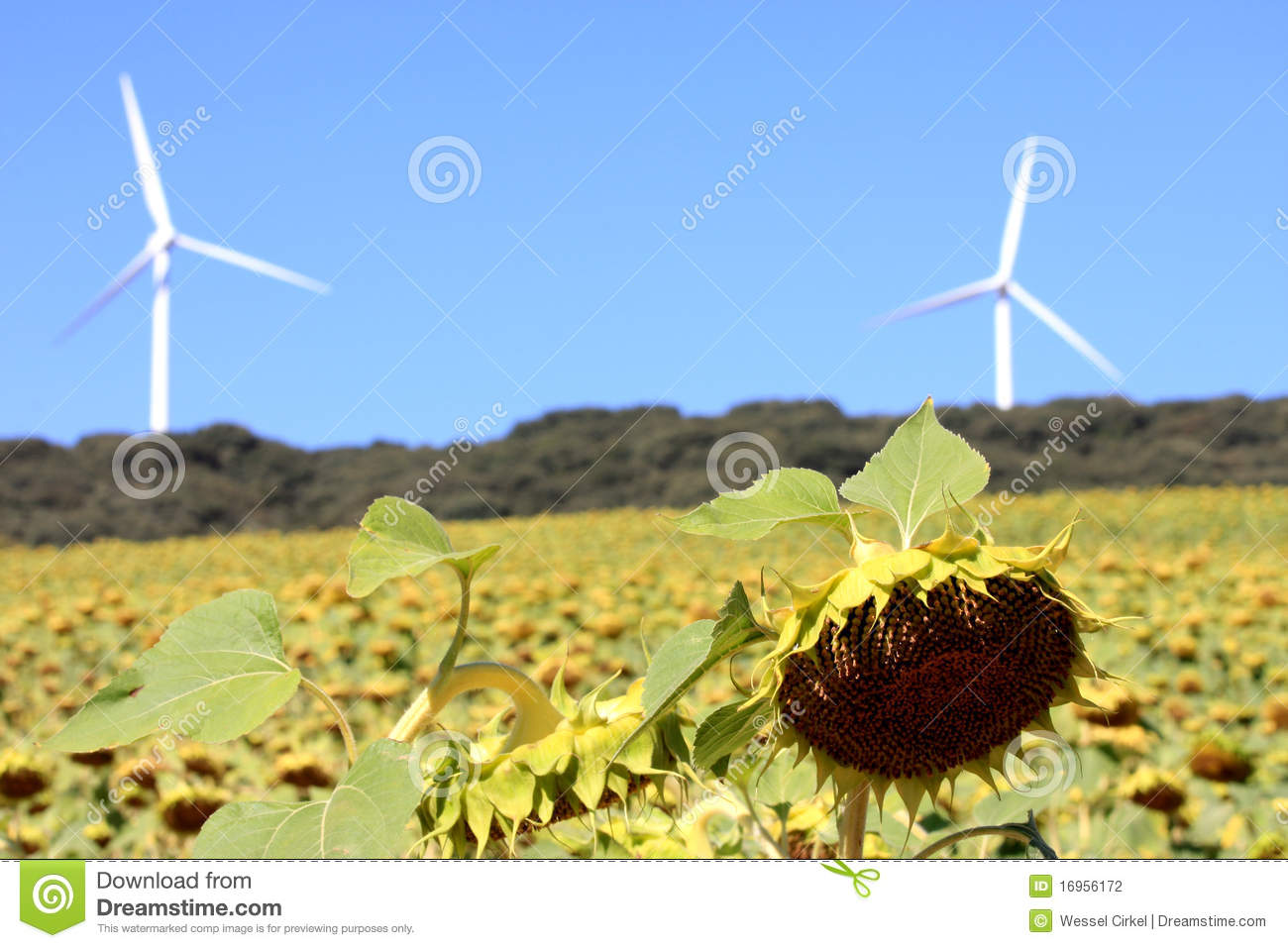 Renewable energy production, bio and wind, Spain