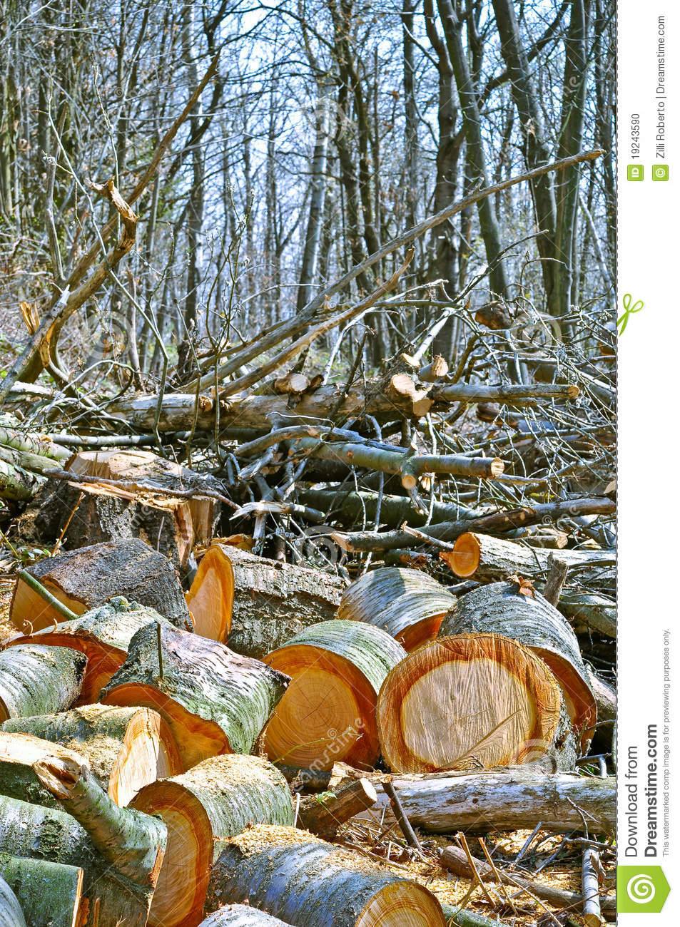 rain forest non renewable resources Non-renewable energy comes from sources that will run out or will not be replenished for thousands or even millions of years most sources of non-renewable energy are fossil.