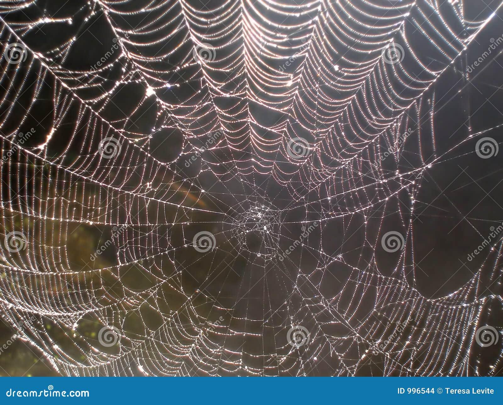 Rengöringsduk för spindel för daggpärlor sparkling