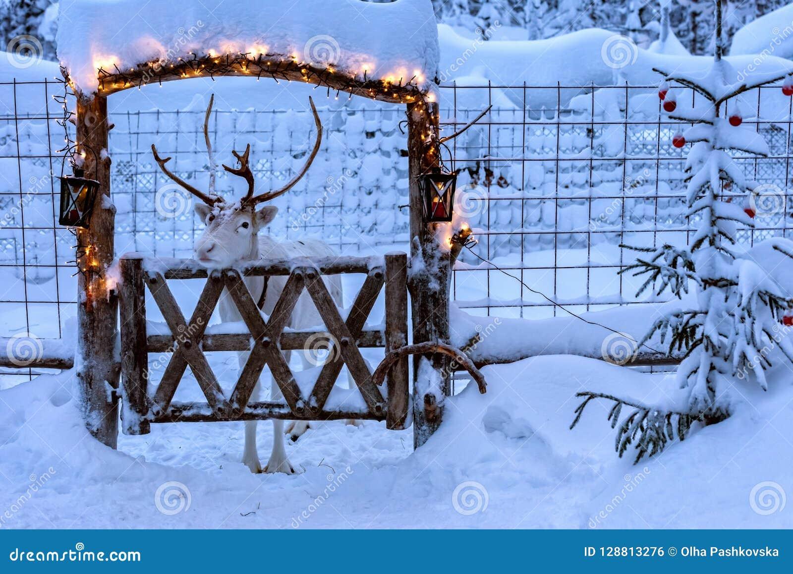 Renna nella recinzione decorata per il Natale