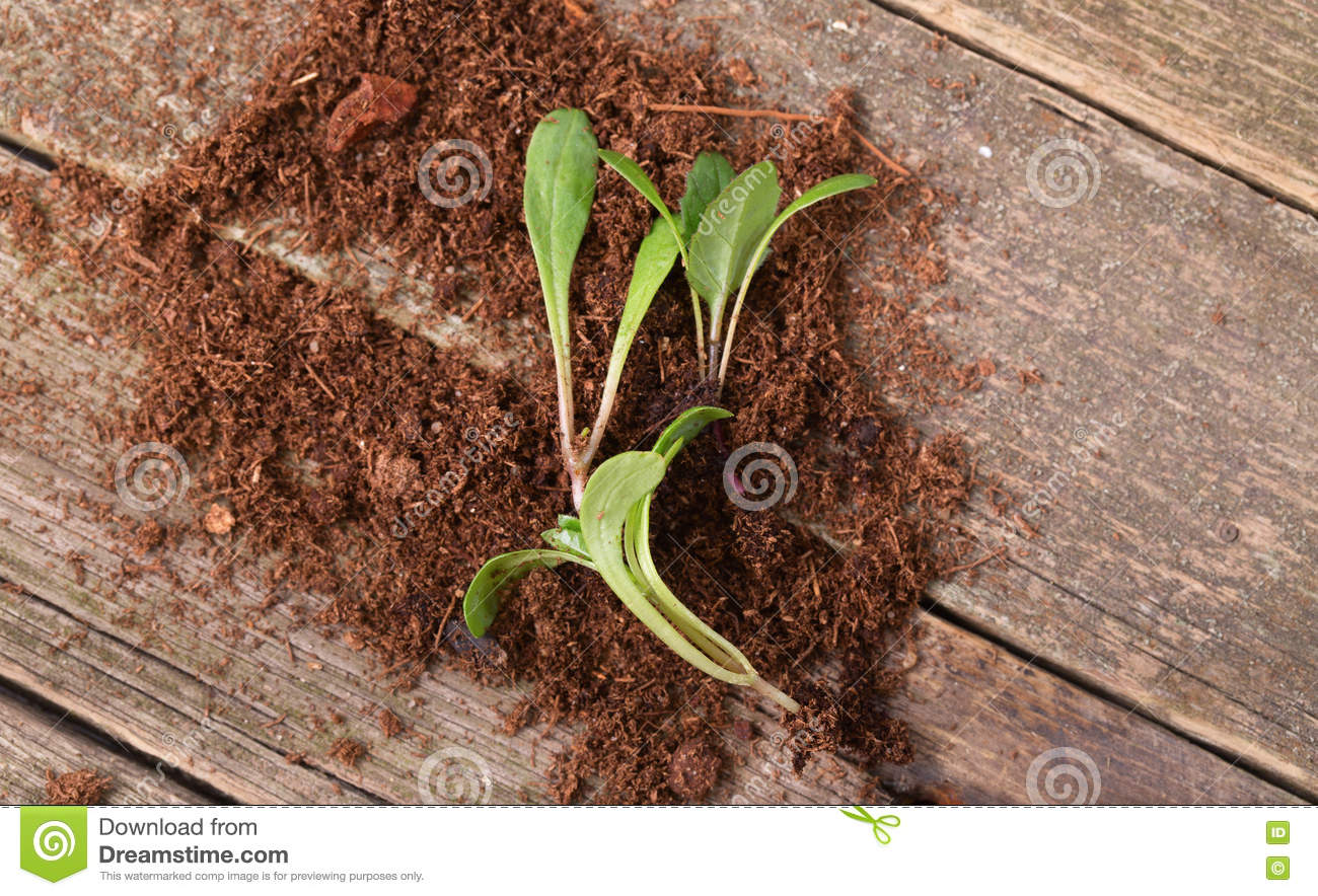 Replacing of seedling several young green sprouts lie on for Soil young s modulus