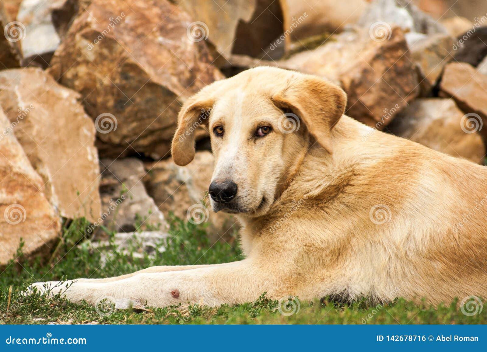 Repos gentil de chien