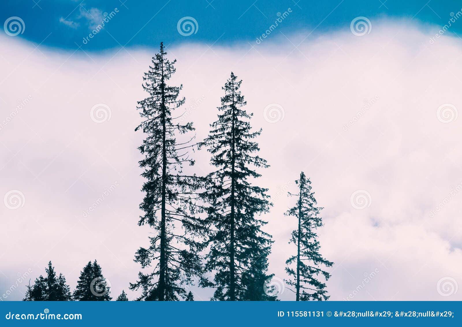 Representación de la foto bosque místico Escena espeluznante de niebla Silhou de los árboles