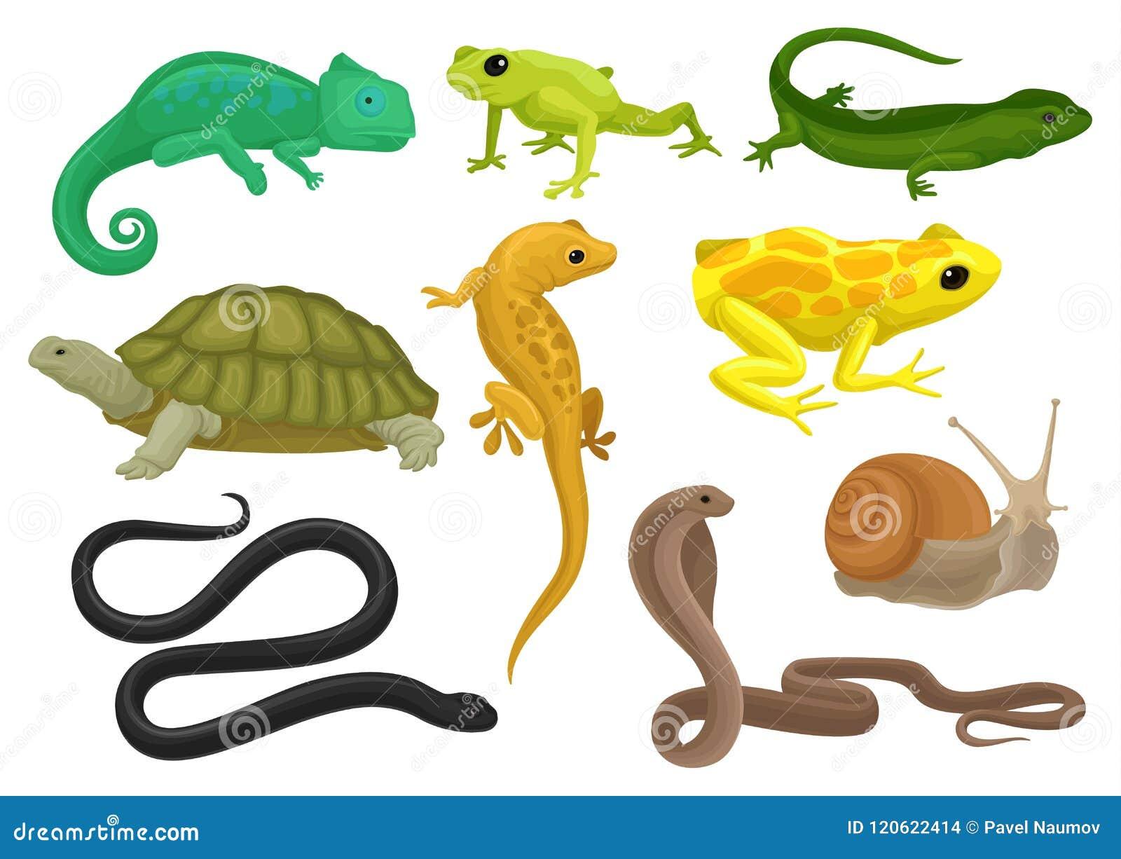 Reptiel en amfibiereeks, kameleon, kikker, schildpad, hagedis, gekko, de vectorillustratie van triton op een witte achtergrond