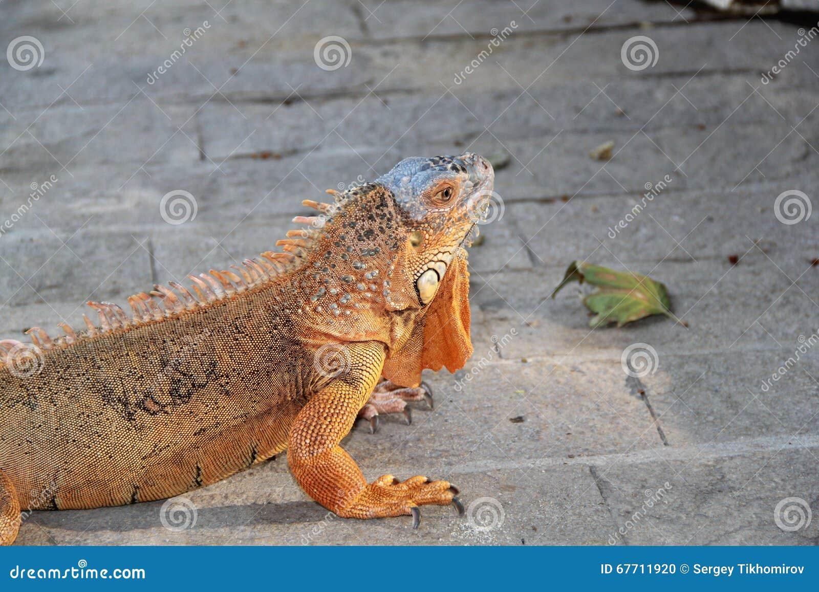 Reptil, año 2015