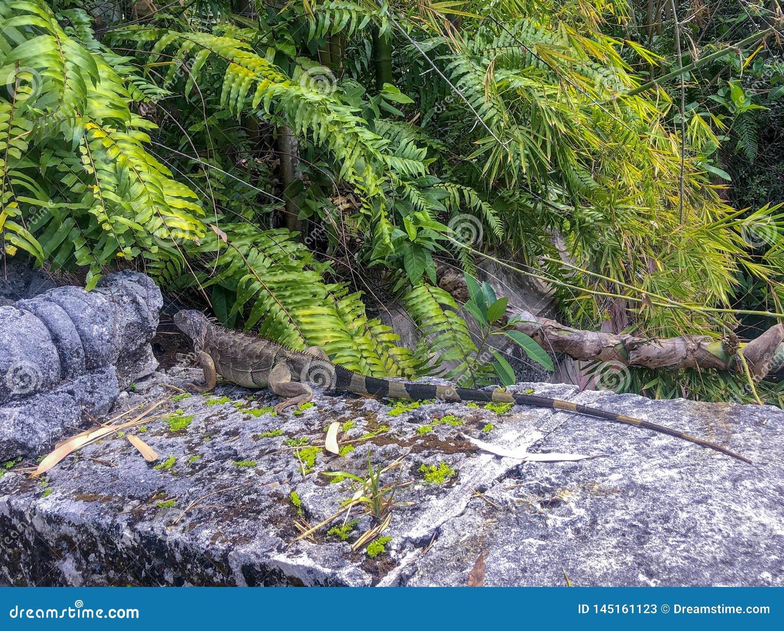 Reptil enmascarado en el jardín