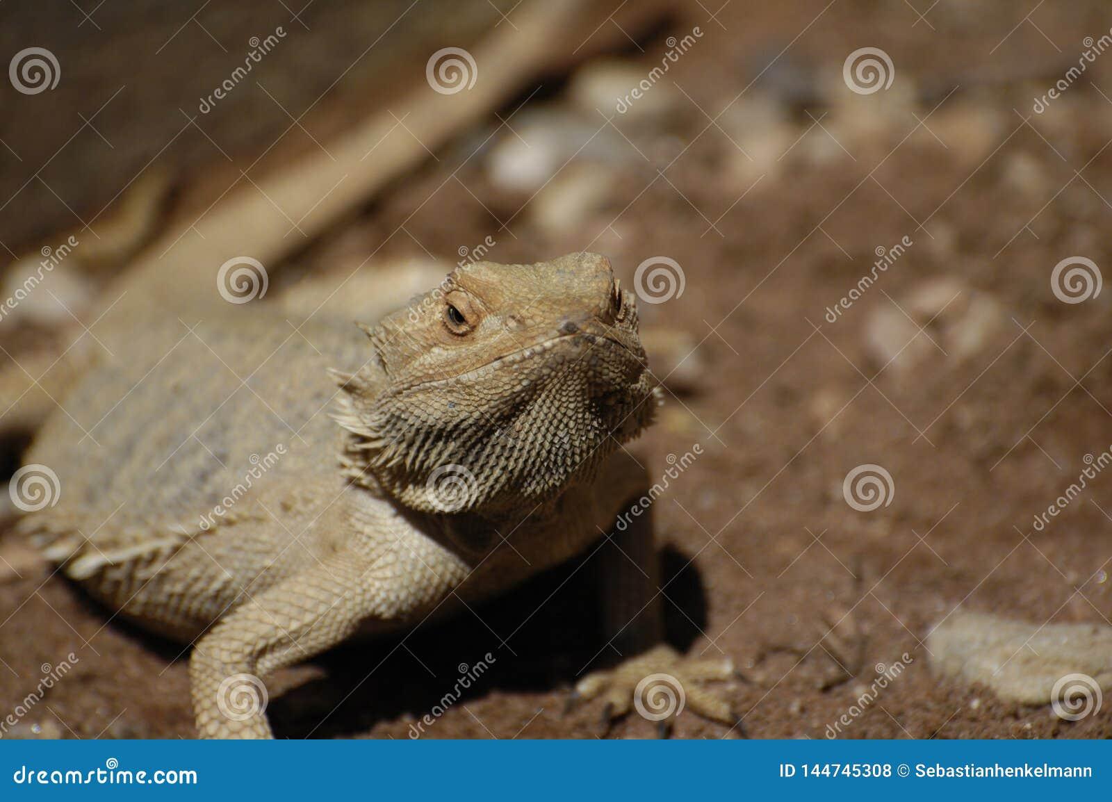 Reptile au soleil