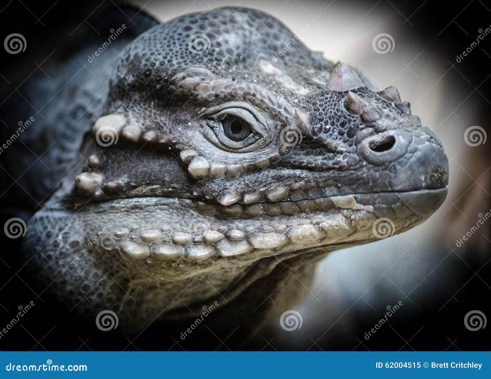 Reptile dinosaur