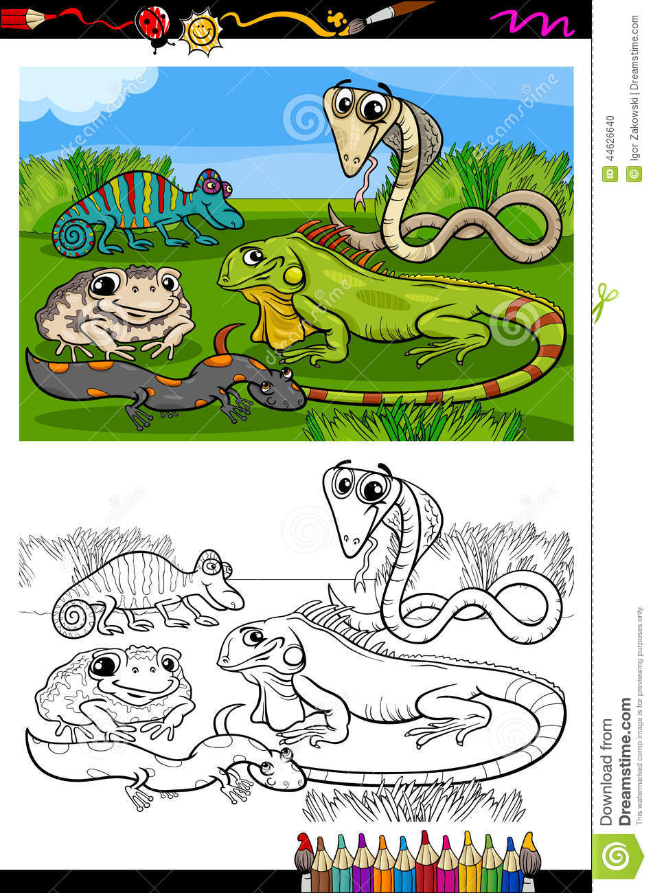 Reptiles And Amphibians Coloring Book Stock Vector Image