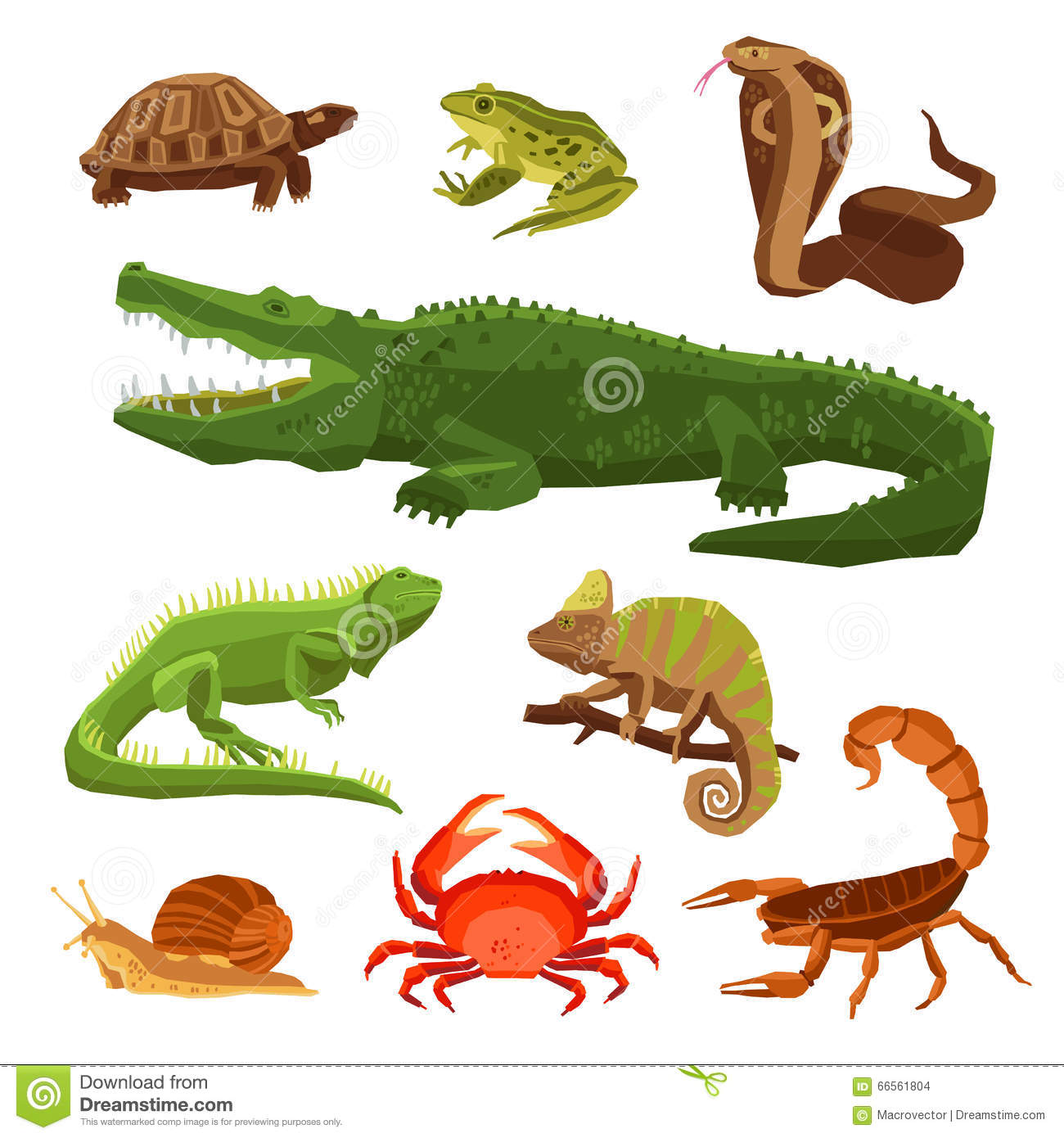 Reptiles And Amphibians Set Stock Vector Image 66561804