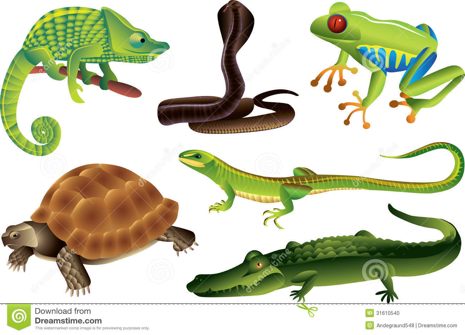 reptiles and amphibians set stock photo image 31610540 chameleon clipart black and white chameleon clip art free