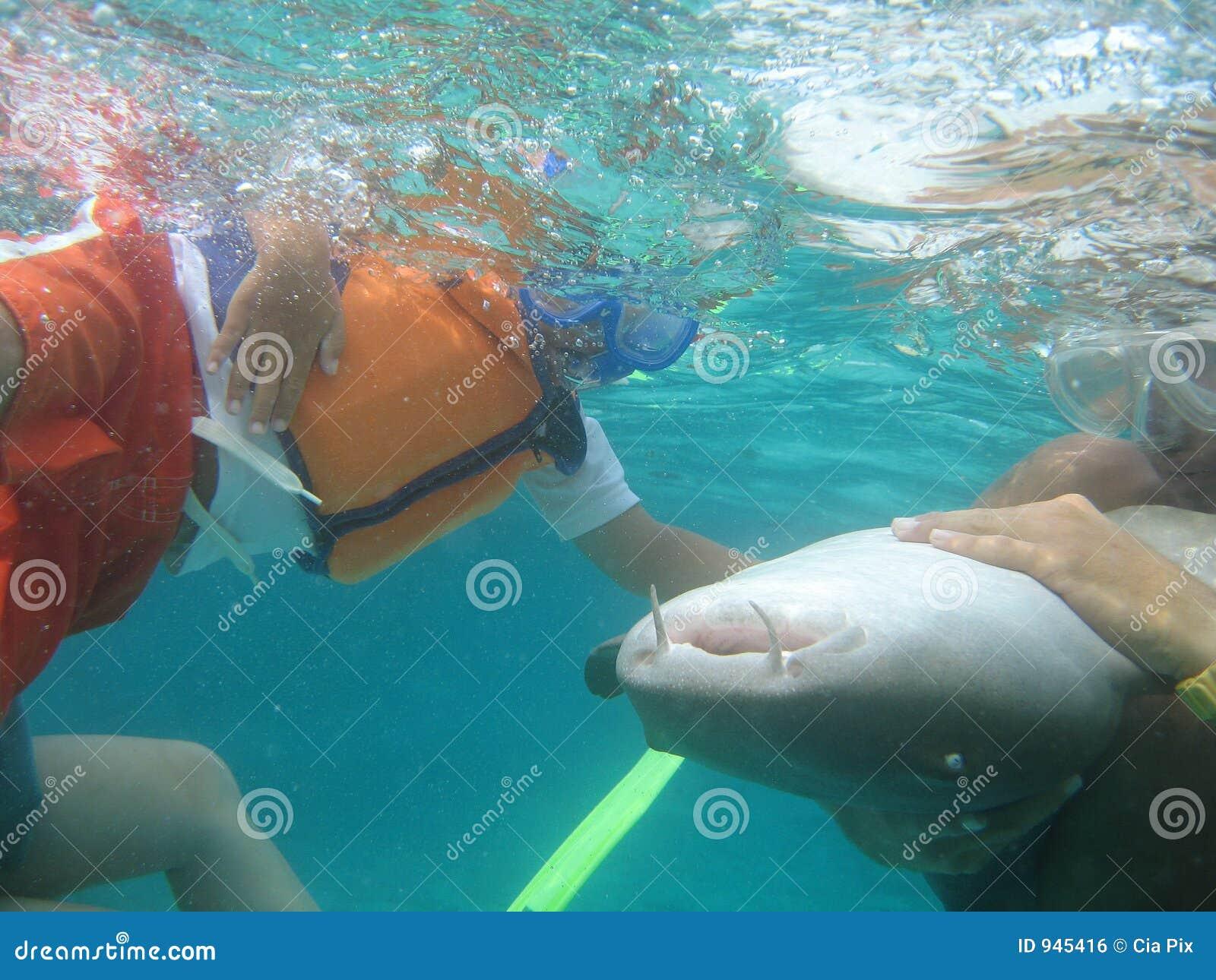 Requin émouvant de garçon à Belize Amérique Centrale