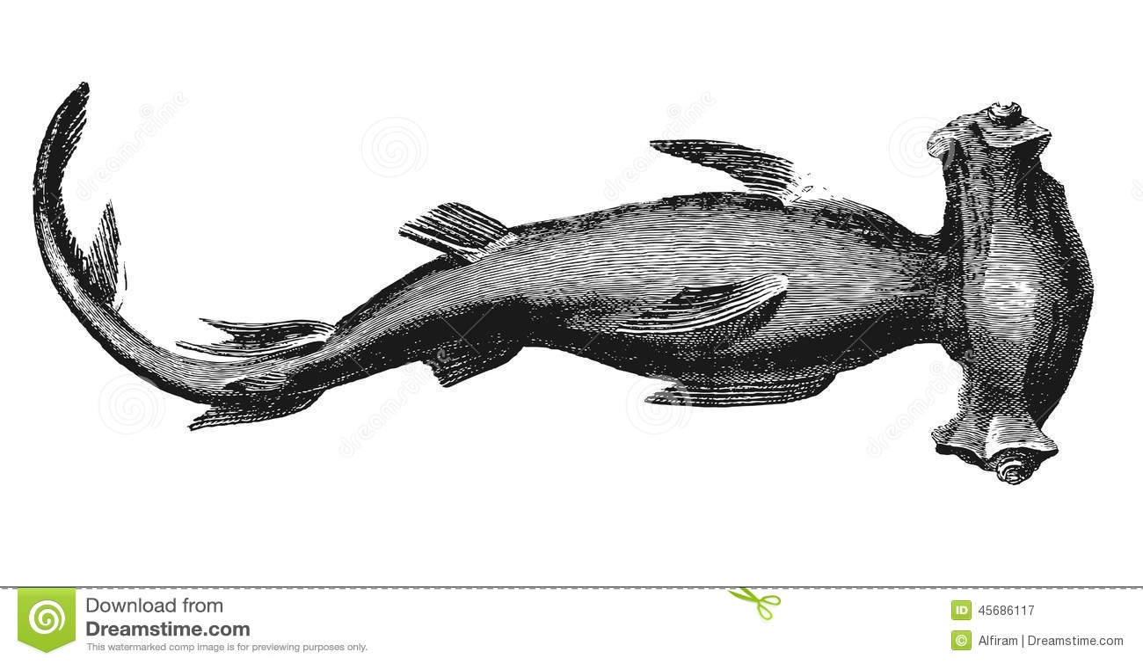 Requin de poisson marteau illustration de vecteur illustration du fond 45686117 - Modele dessin requin ...