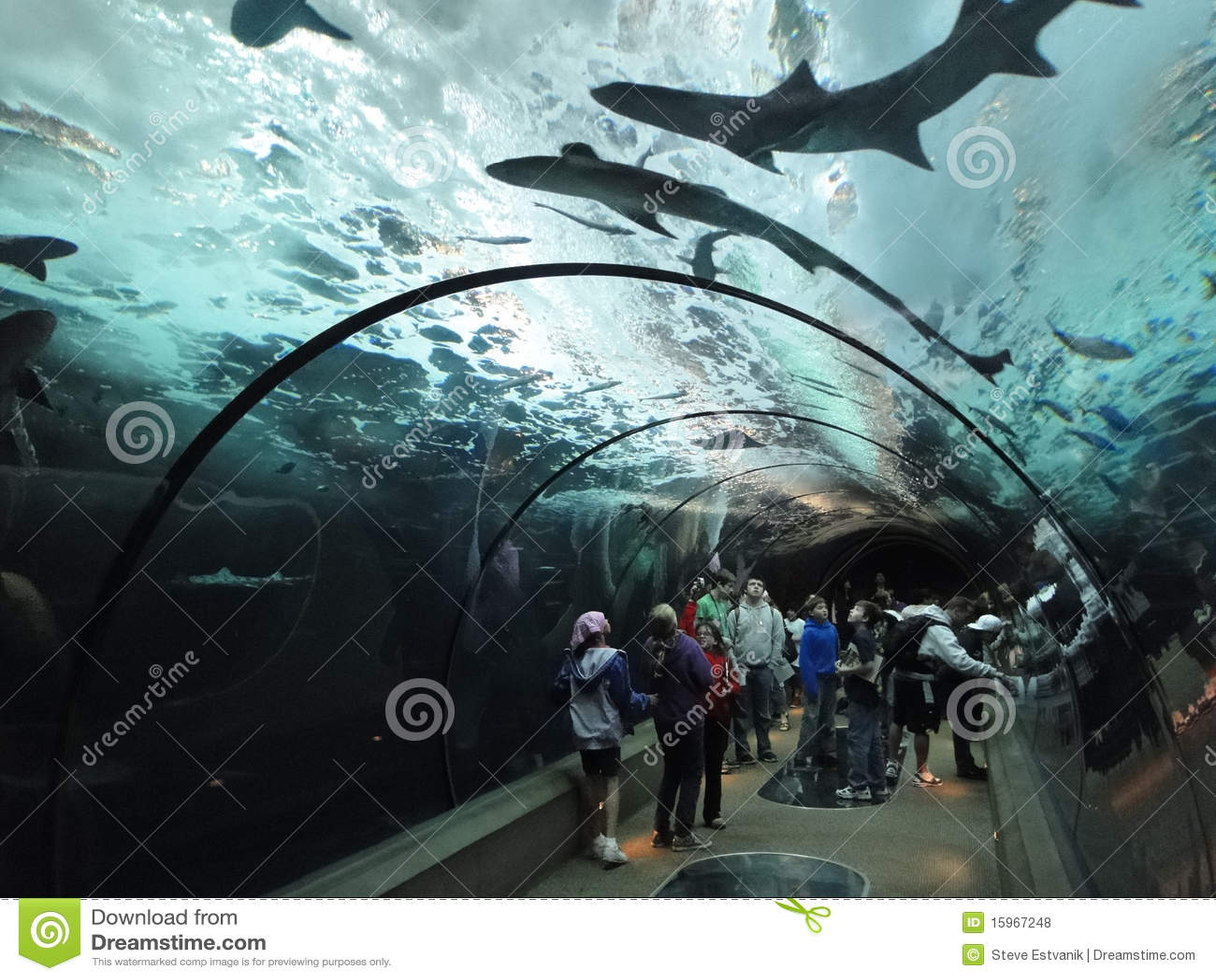 Requins de natation de montre de touristes de dessous