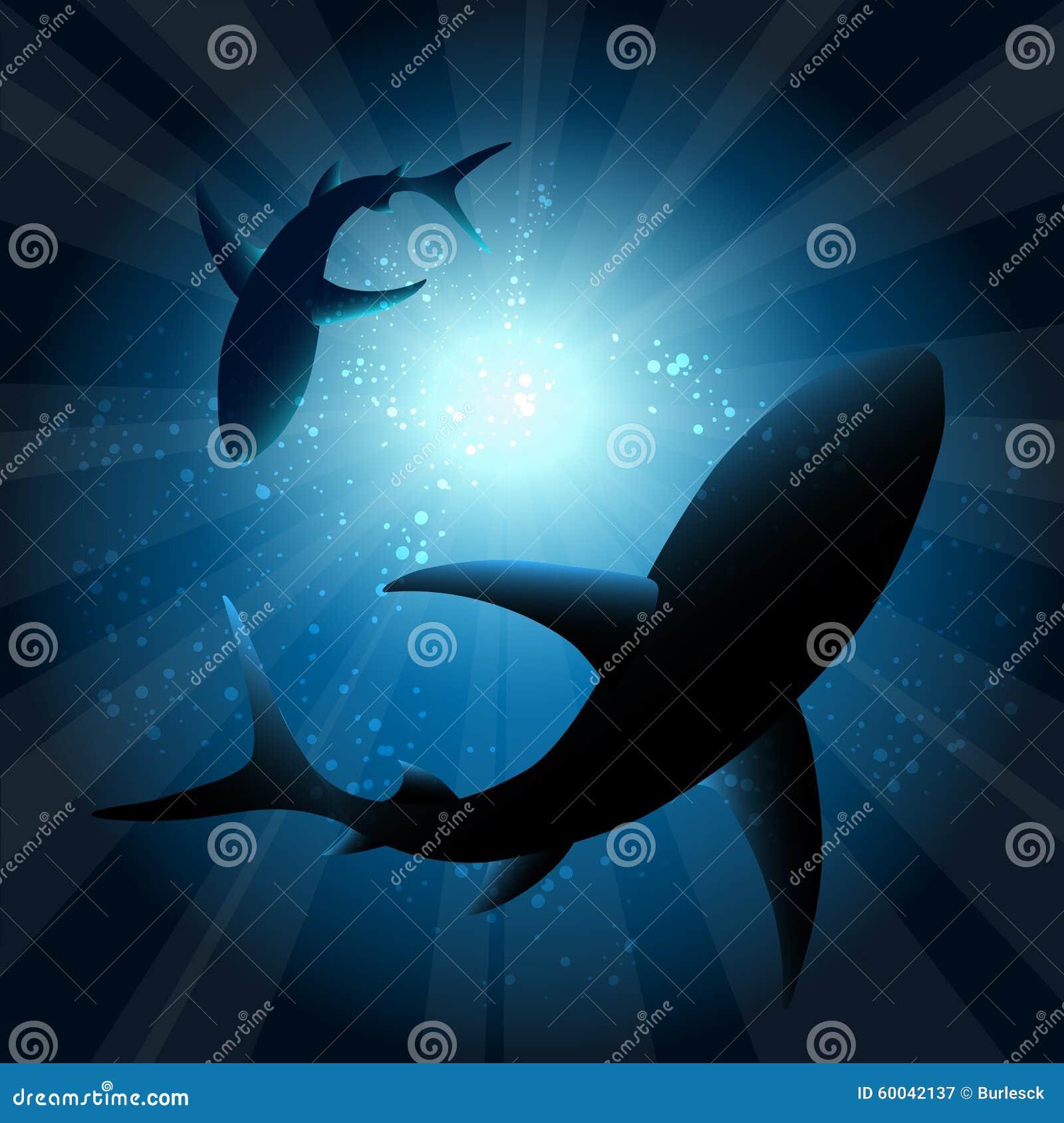 Requins sous l eau