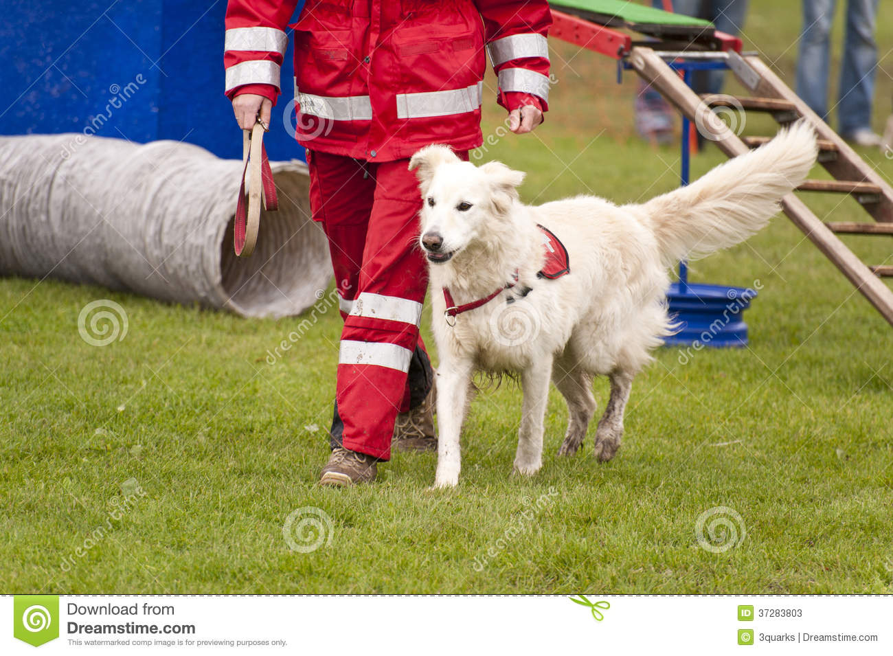 Download Rescue Dog stock image. Image of protection, lifesaving - 37283803