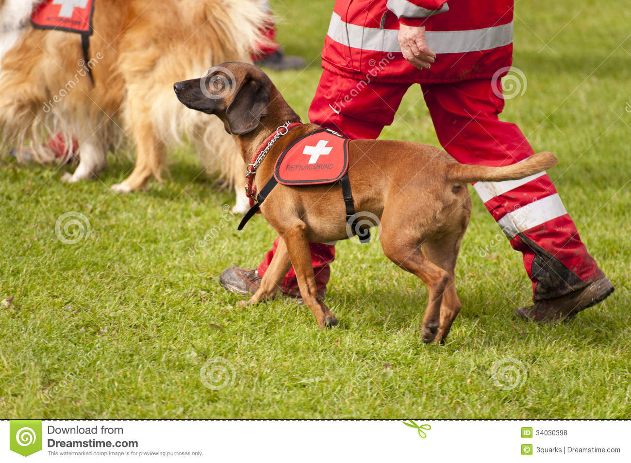 Download Rescue Dog Squadron stock photo. Image of mountains, disaster - 34030398