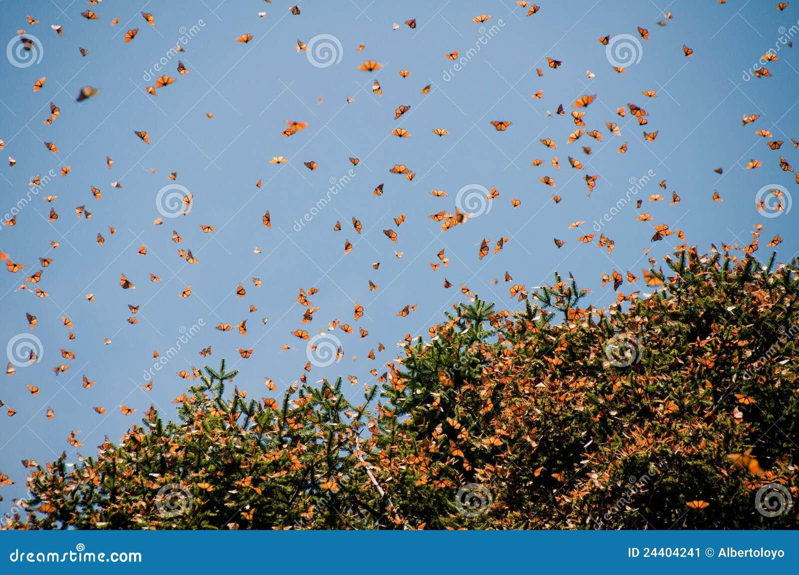 Reserv för biosfärfjärilsmexico monark