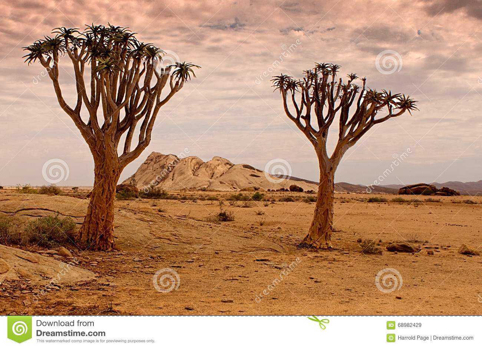 Reserva natural de Naukluft, deserto de Namib, Namíbia