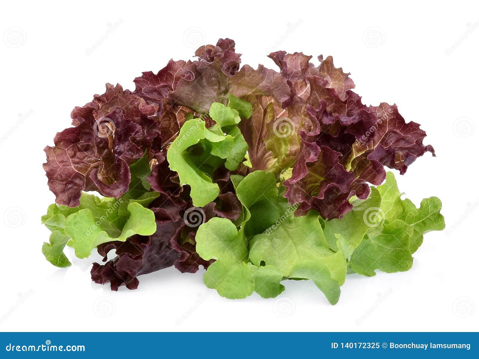 Resh zieleni i czerwieni koralowa sałatka lub czerwieni sałata odizolowywająca na bielu