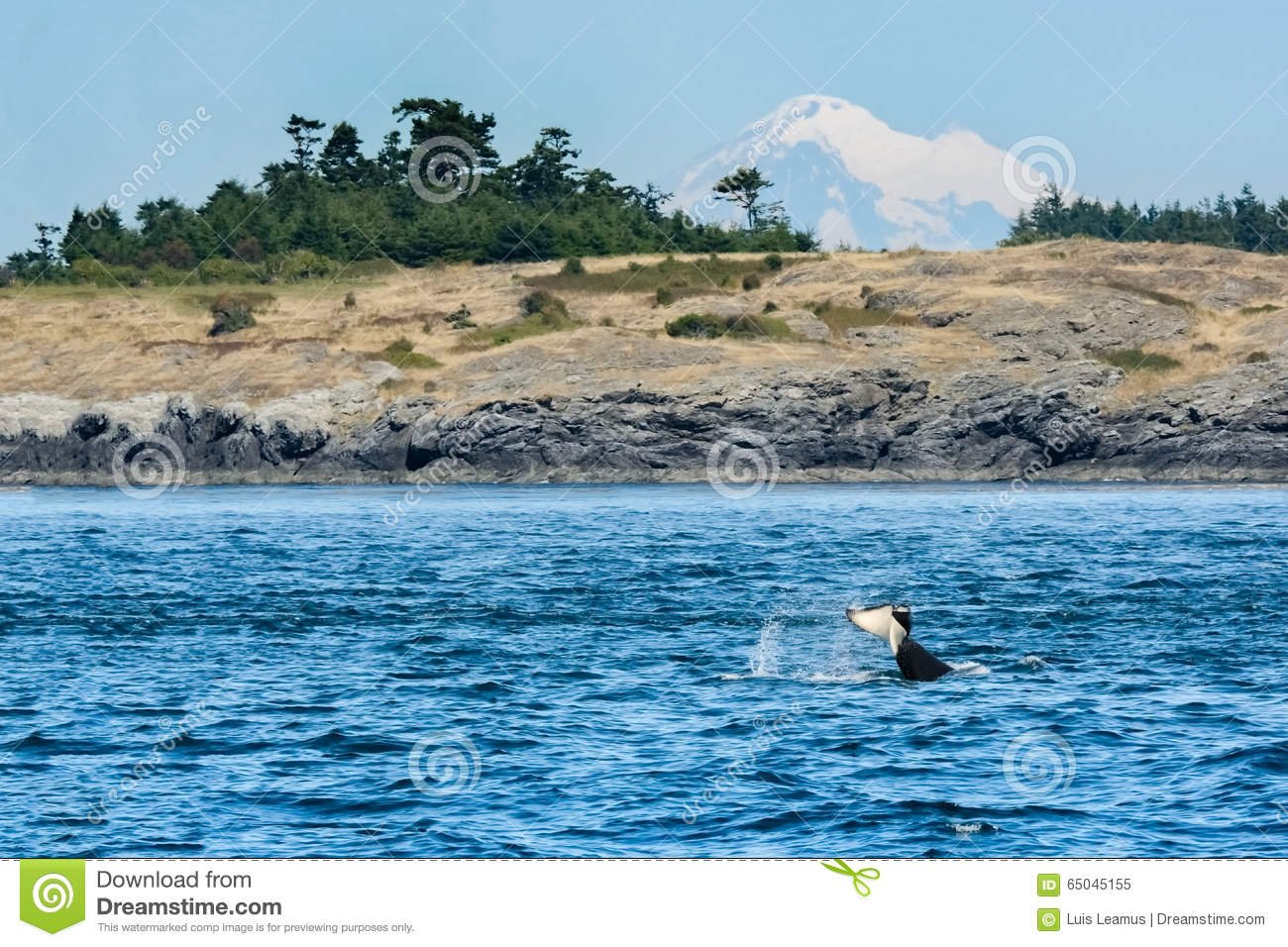 Landscape on vancouver island bc canada royalty free for Landscaping rocks victoria bc