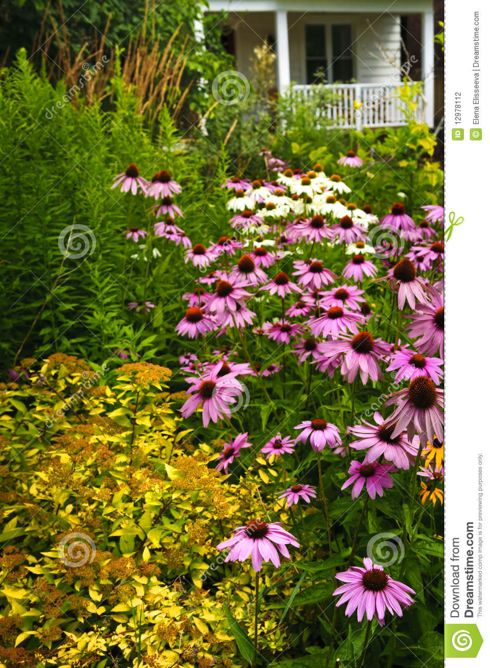 Residential Landscaping Plants : Residential garden landscaping stock photography image