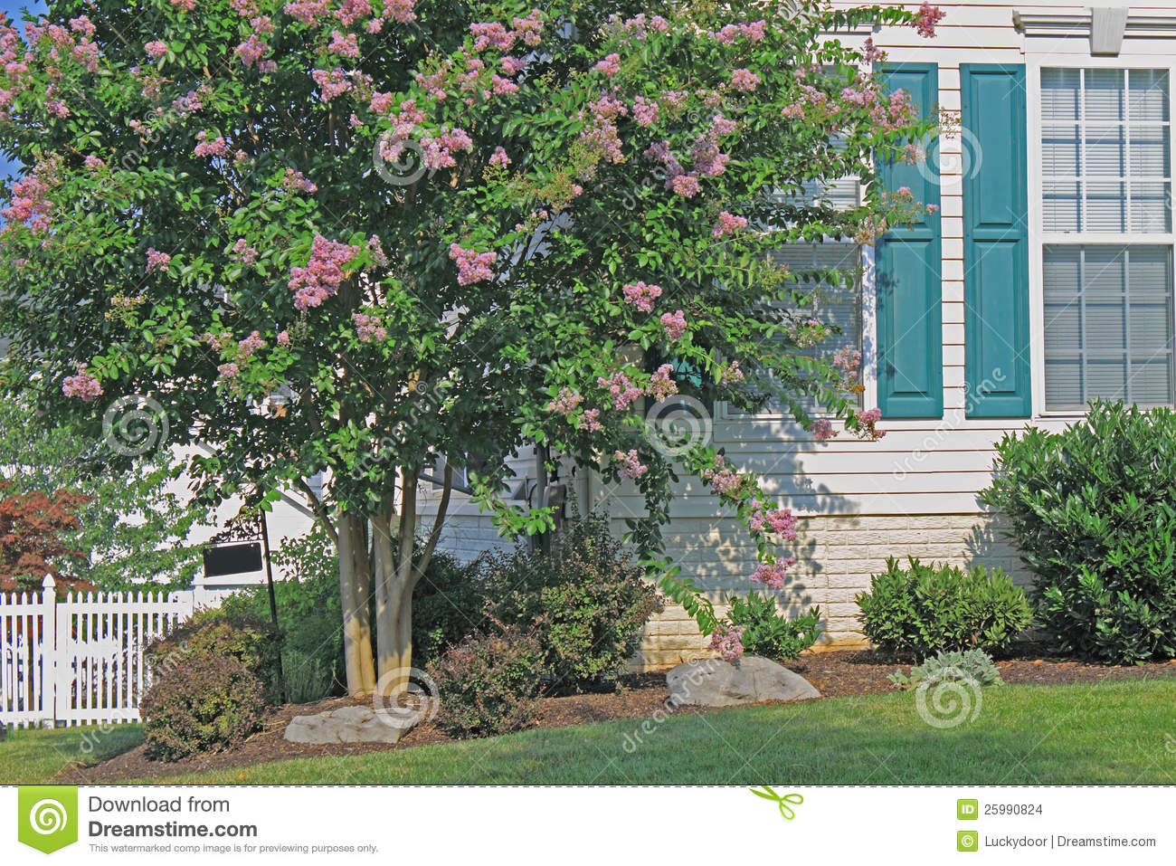 Home landscaping stock photo image of purple green for Landscaping rocks myrtle beach