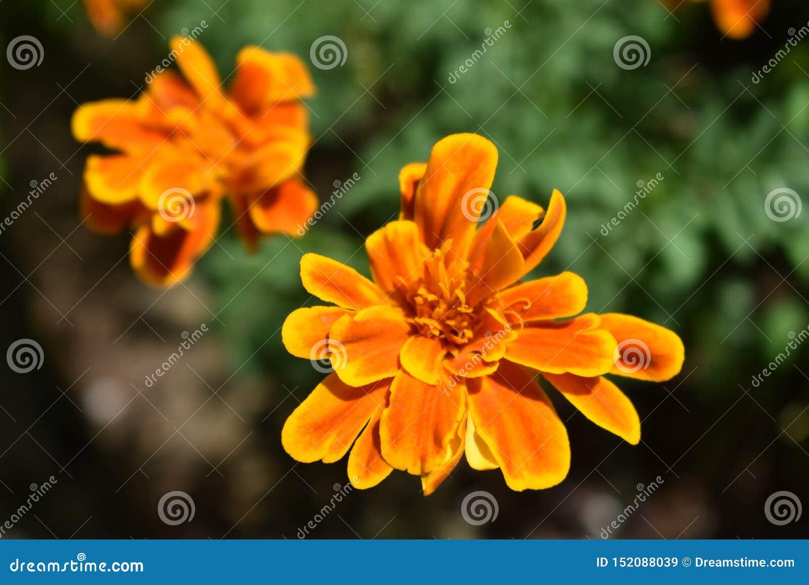 Resplandor solar anaranjado