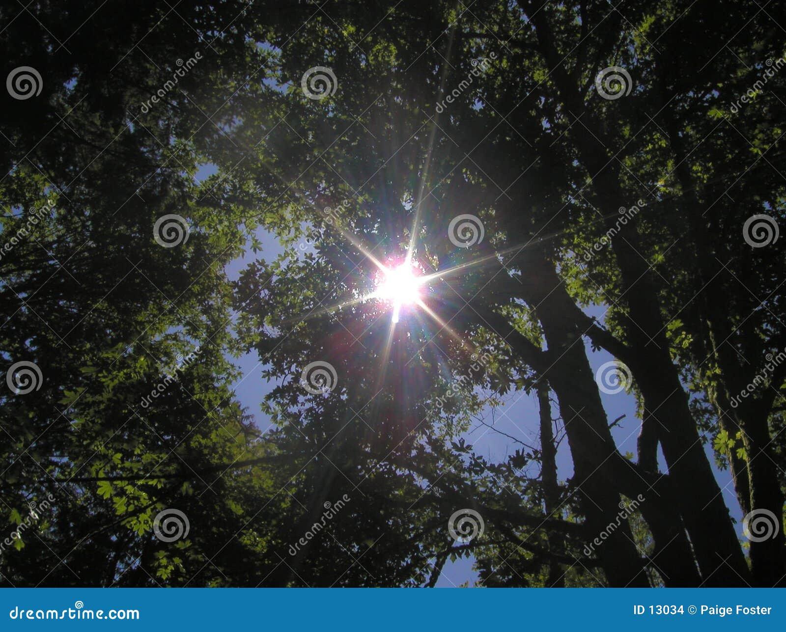 Resplandor solar a través de árboles