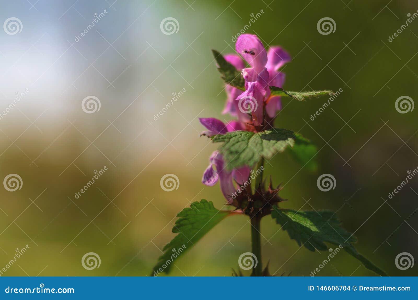Ressort-fleur magique