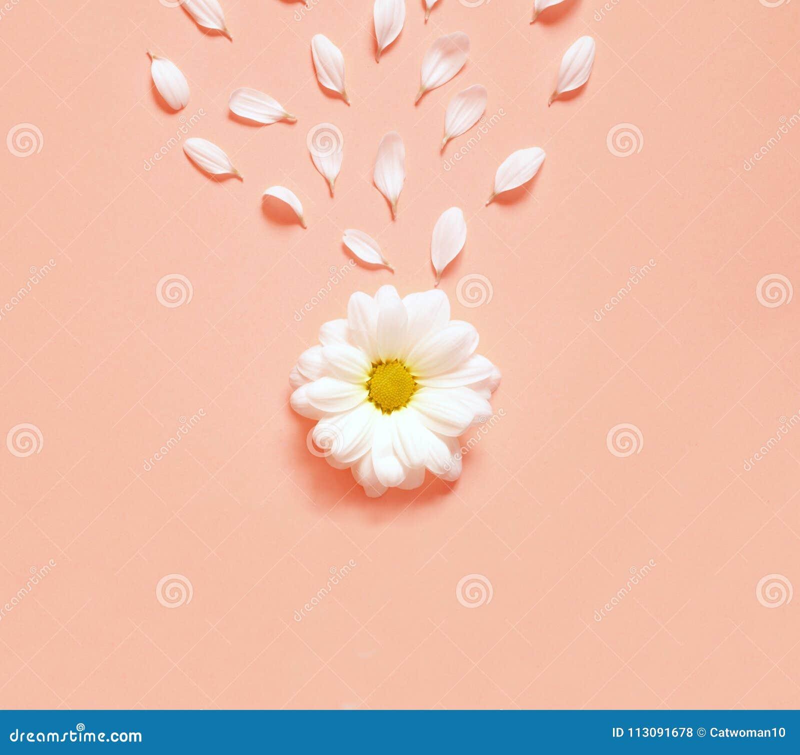 Ressort Ou Fond D Ete Avec L Espace De Copie Pour Le Texte Fleur