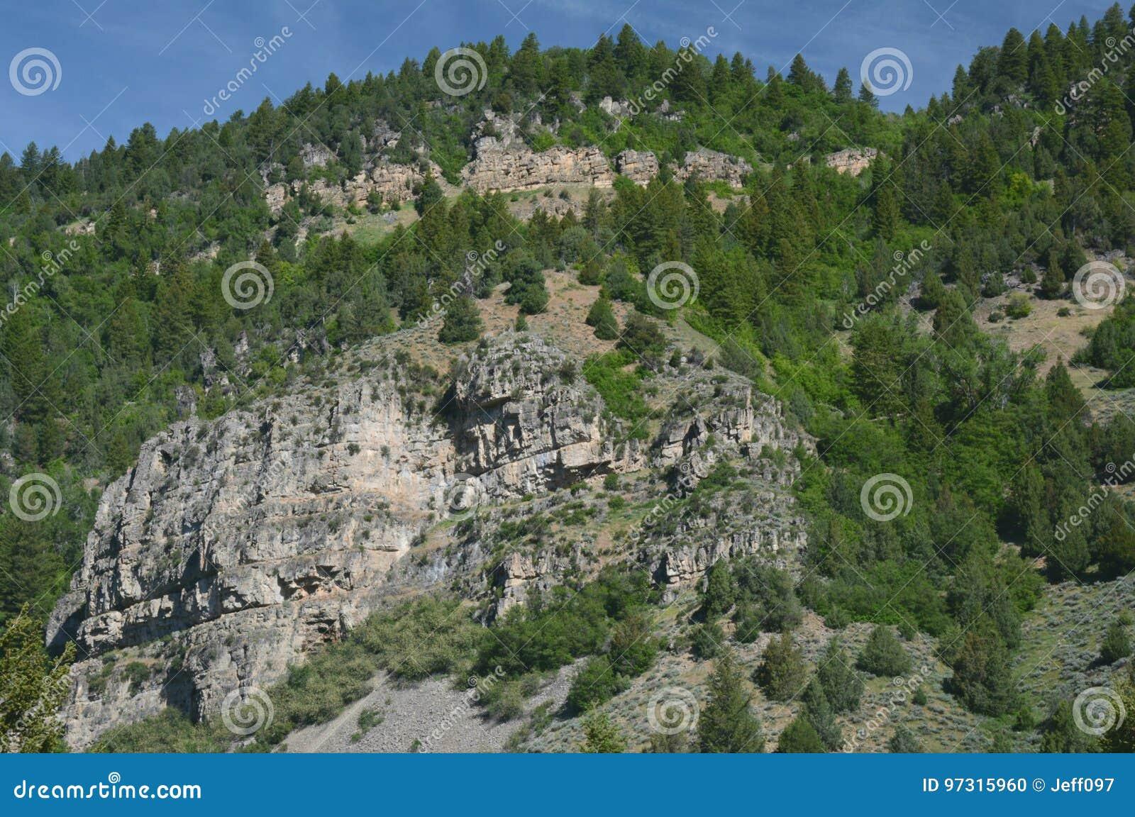Ressortissant Forest Scenic Highlight de cachette