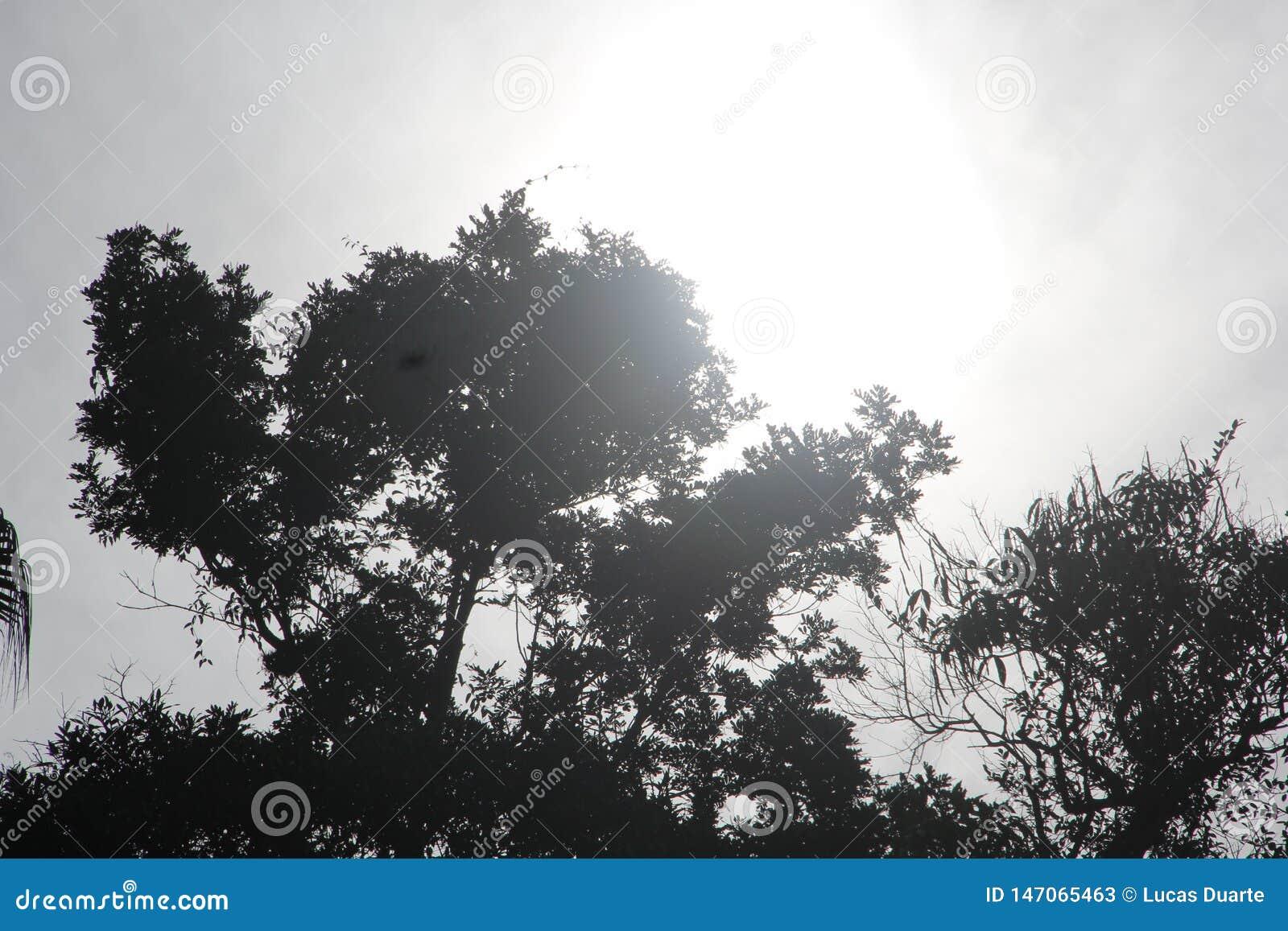 Rest en schets van verscheidene bomen in het bos
