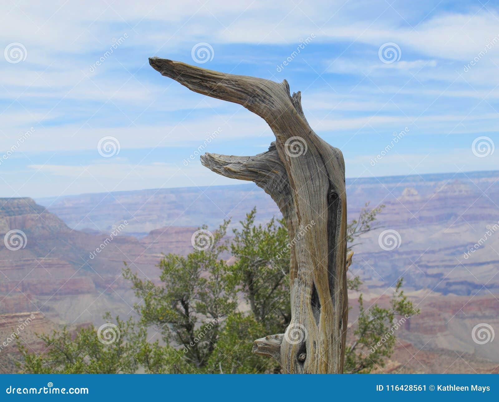Rest van Cedar Tree Against Background van Woestijncanion
