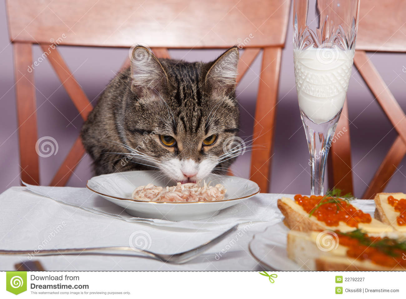Restaurant For Cat Royalty Free Stock Photography Image 22792227
