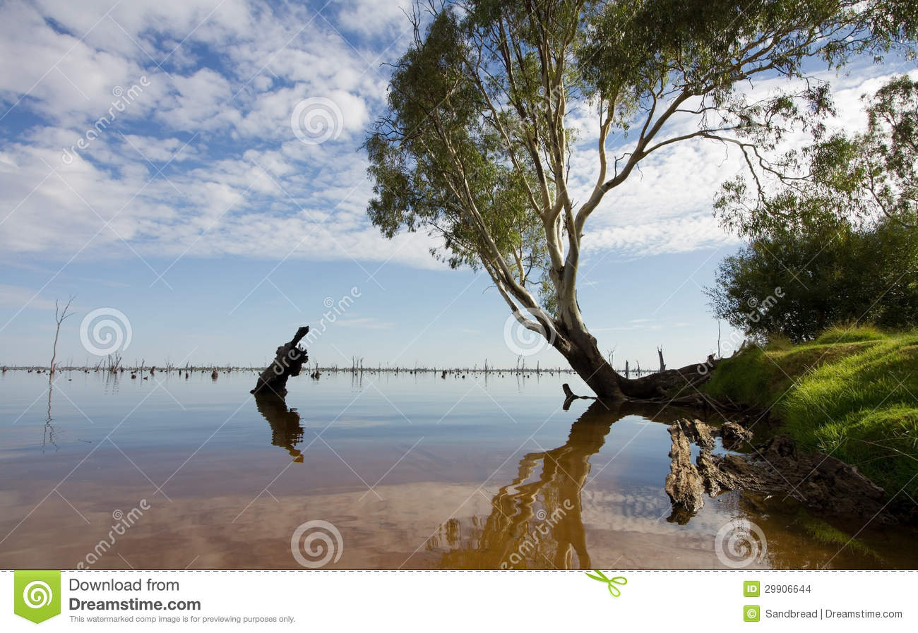 Mulwala Australia  city photos : Gum Tree At Lake Mulwala, Australia Stock Images Image: 29906644