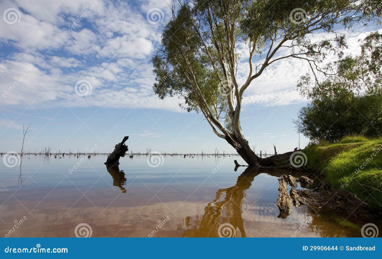 Mulwala Australia  City pictures : Gum Tree At Lake Mulwala, Australia Stock Images Image: 29906644