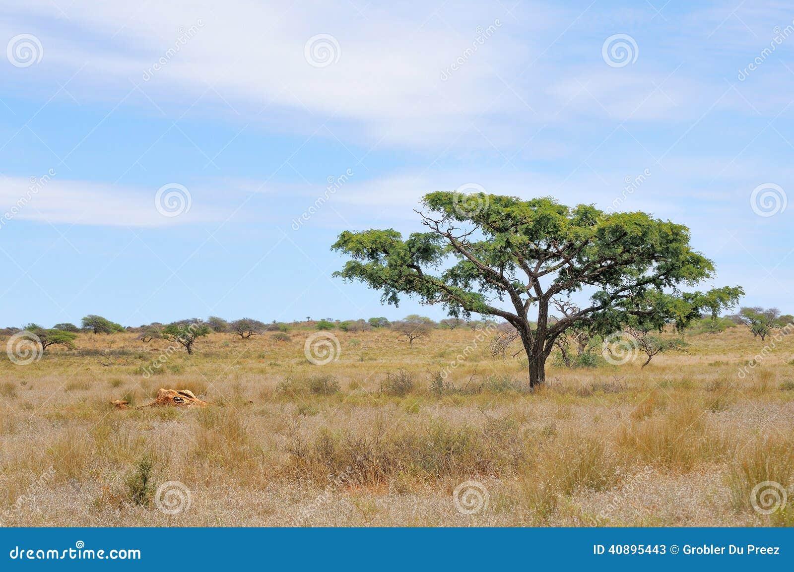 Resti di una giraffa