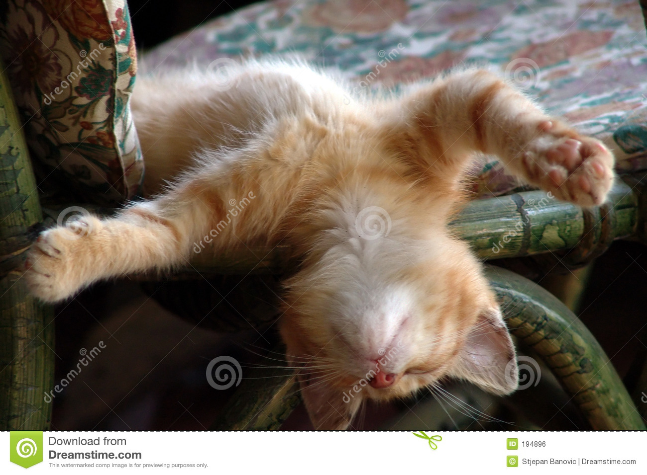 resting cat royalty free stock image   image 194896