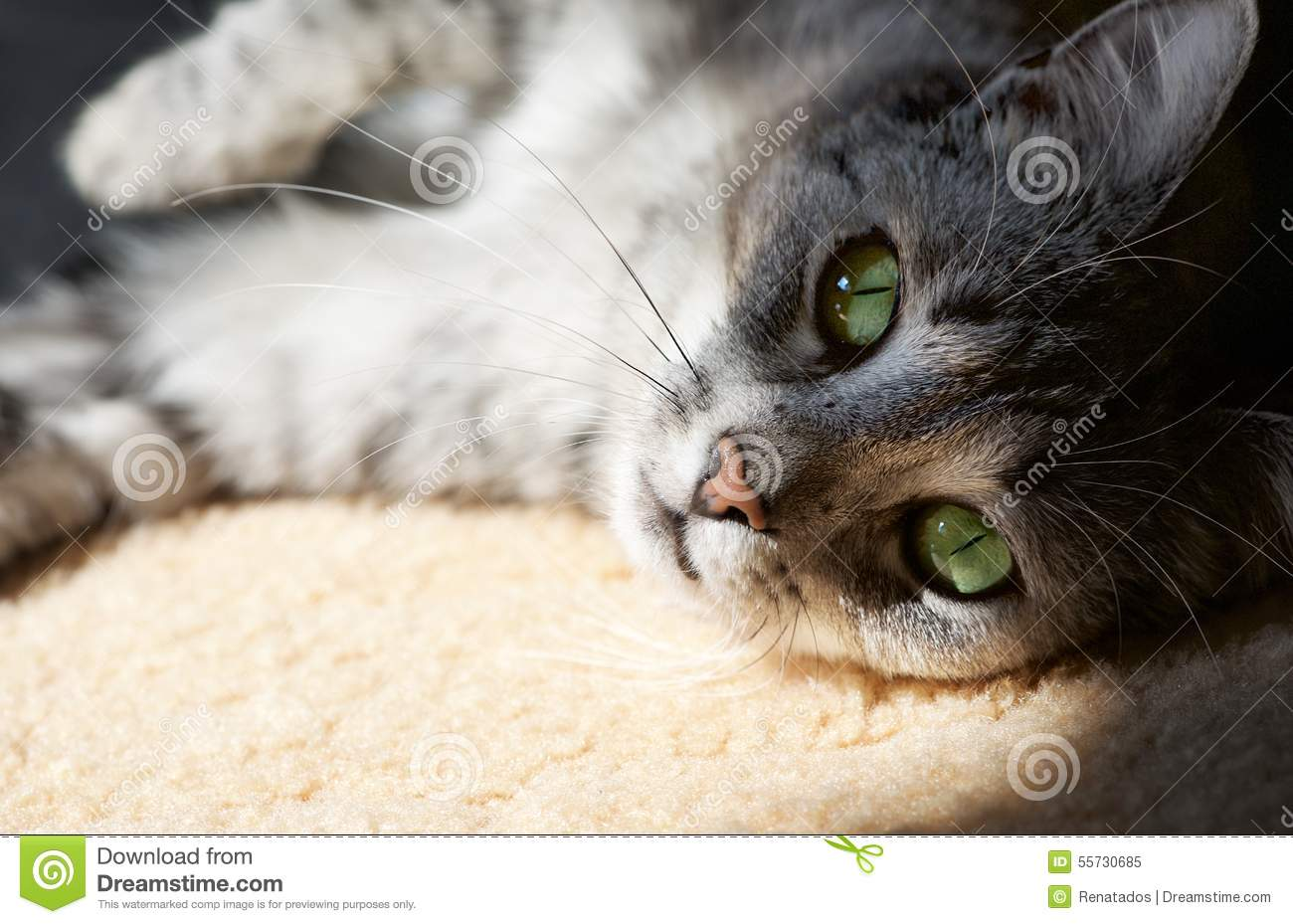 Resting cat in natural home background in a shade, lazy cat face close up, small sleepy lazy cat, domestic animal on siesta